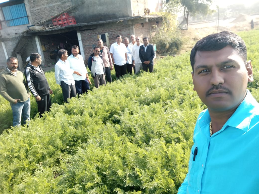 Carrot Field At Indore